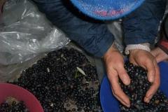 Verarbeitung der Oliven